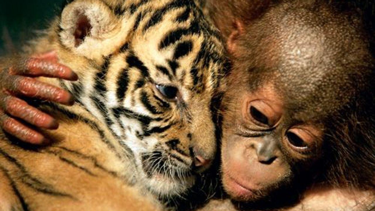Ungewöhnliche Tierfreundschaften