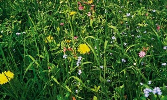 Gräsersorten wiesen hits süddeutsche zeitung magazin