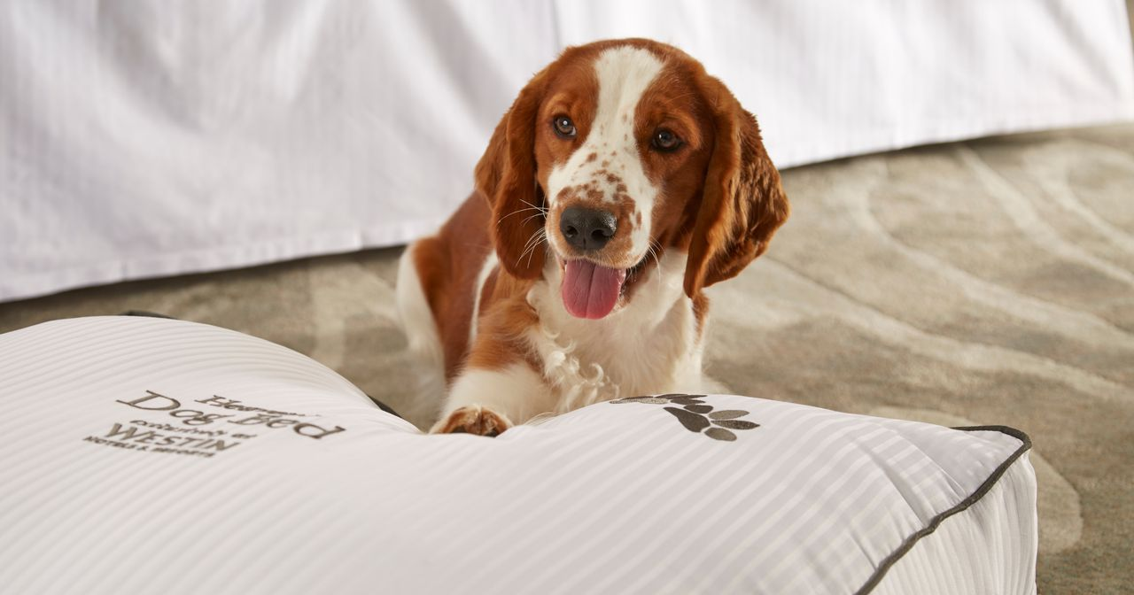 Wie US-Hotels herrenlose Hunde vermitteln