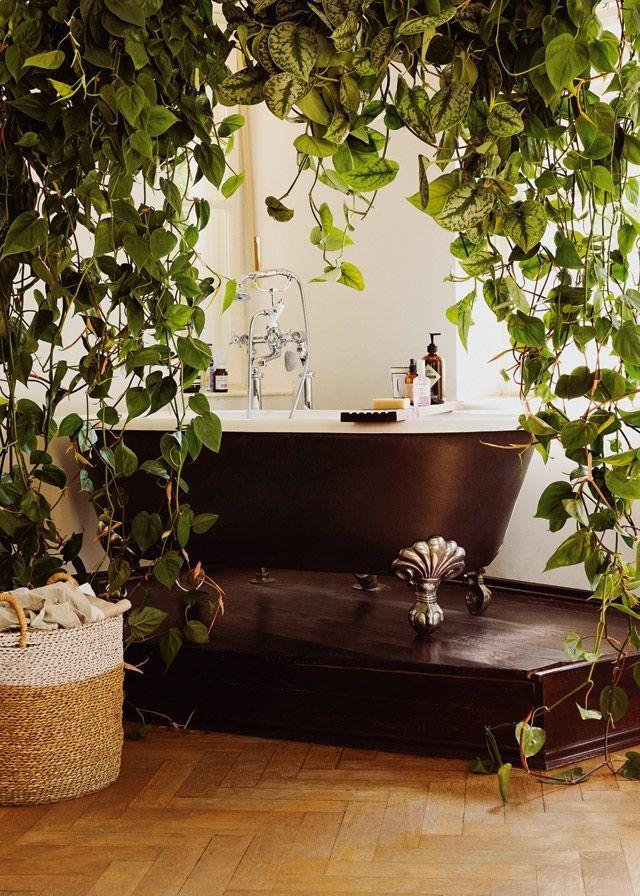 Diese Pflanzen eignen sich für das Badezimmer - Süddeutsche Zeitung ...
