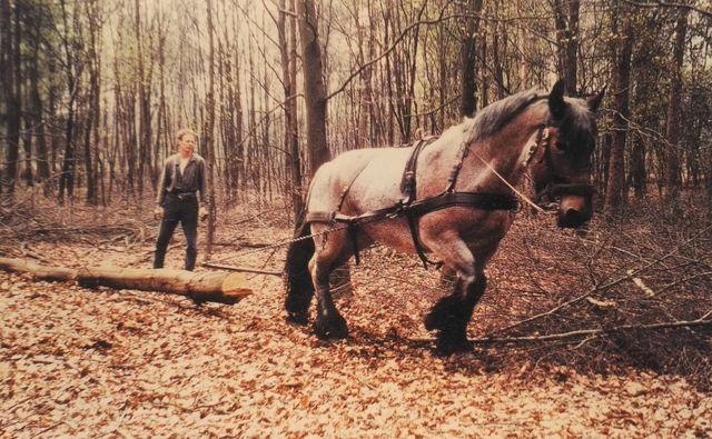 Tierkolumne Lena Das Besondere Arbeitspferd Sz Magazin