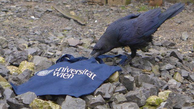 Überreife Deutsche Ficksäue lassen sich privat durch vögeln
