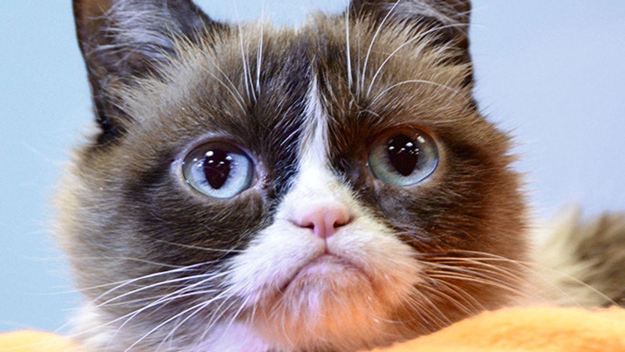 Cat Content: Die Ahnenreihe der Internet-Katzen